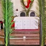 palms1-1